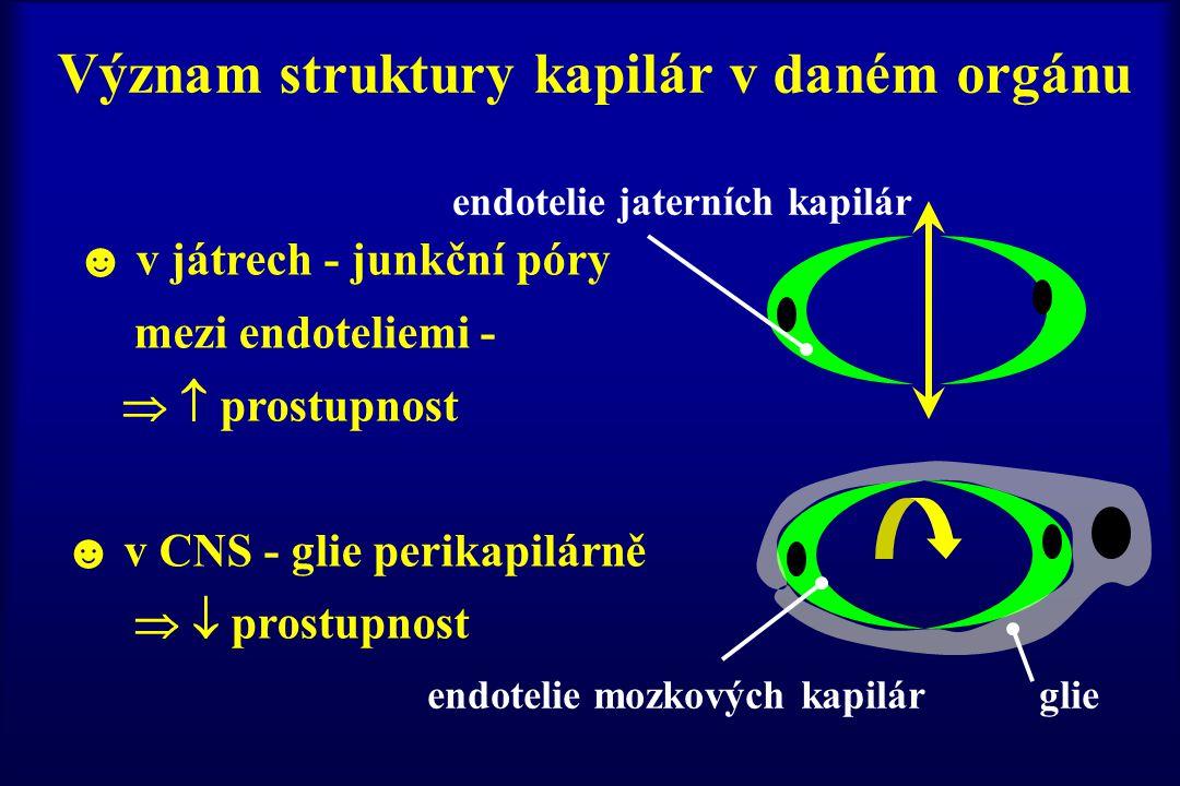 endotelie jaterních kapilár Význam struktury kapilár v daném orgánu ☻ v játrech - junkční póry mezi endoteliemi -   prostupnost ☻ v CNS - glie perik