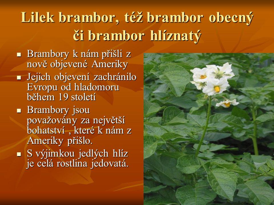 Lilek brambor, též brambor obecný či brambor hlíznatý Brambory k nám přišli z nově objevené Ameriky Brambory k nám přišli z nově objevené Ameriky Jeji