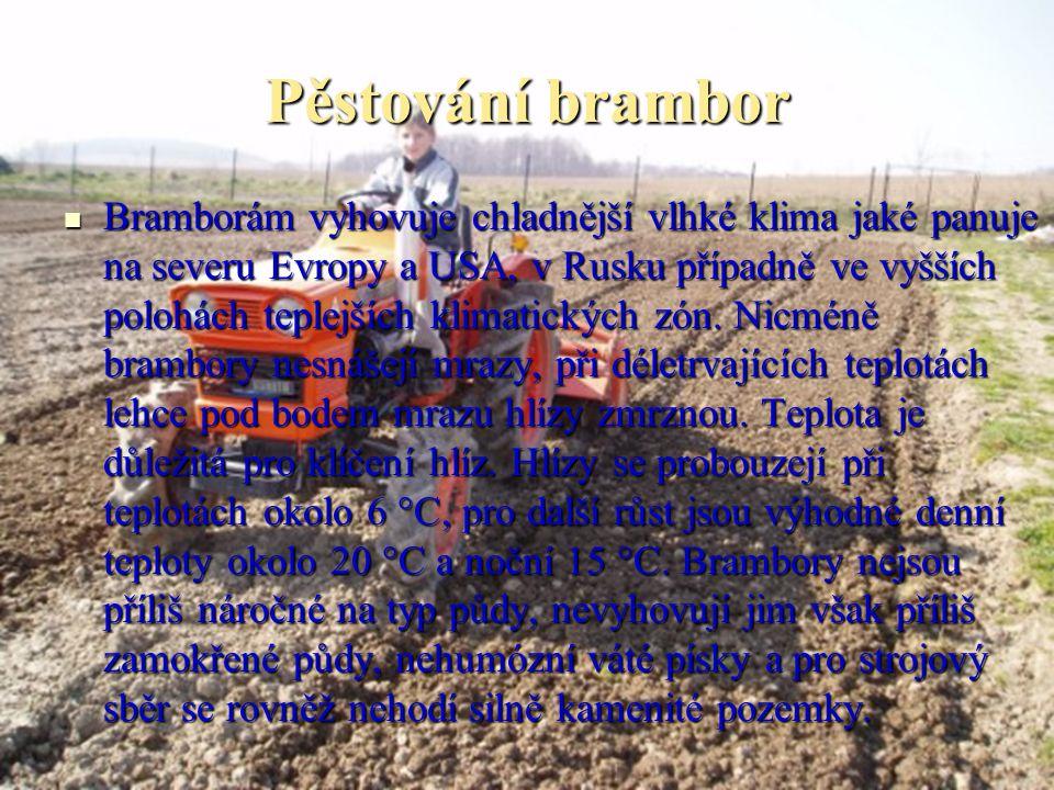 Pěstování brambor Bramborám vyhovuje chladnější vlhké klima jaké panuje na severu Evropy a USA, v Rusku případně ve vyšších polohách teplejších klimat