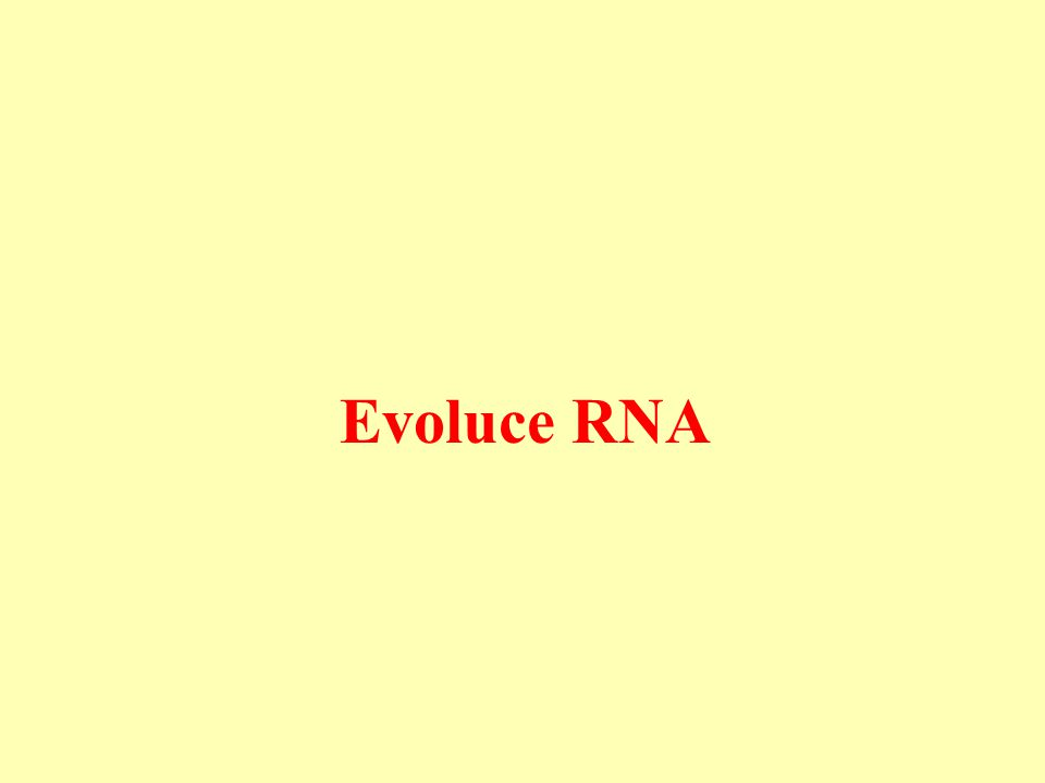 Evoluce RNA