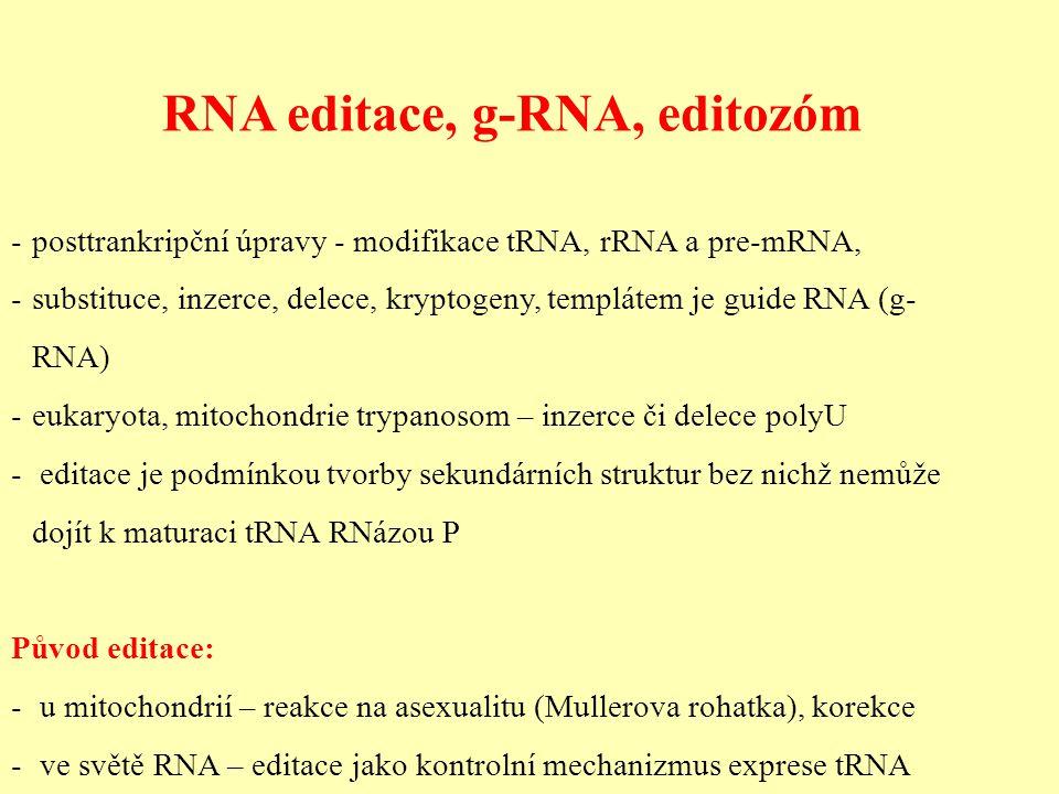 RNA editace, g-RNA, editozóm - posttrankripční úpravy - modifikace tRNA, rRNA a pre-mRNA, - substituce, inzerce, delece, kryptogeny, templátem je guide RNA (g- RNA) - eukaryota, mitochondrie trypanosom – inzerce či delece polyU - editace je podmínkou tvorby sekundárních struktur bez nichž nemůže dojít k maturaci tRNA RNázou P Původ editace: - u mitochondrií – reakce na asexualitu (Mullerova rohatka), korekce - ve světě RNA – editace jako kontrolní mechanizmus exprese tRNA