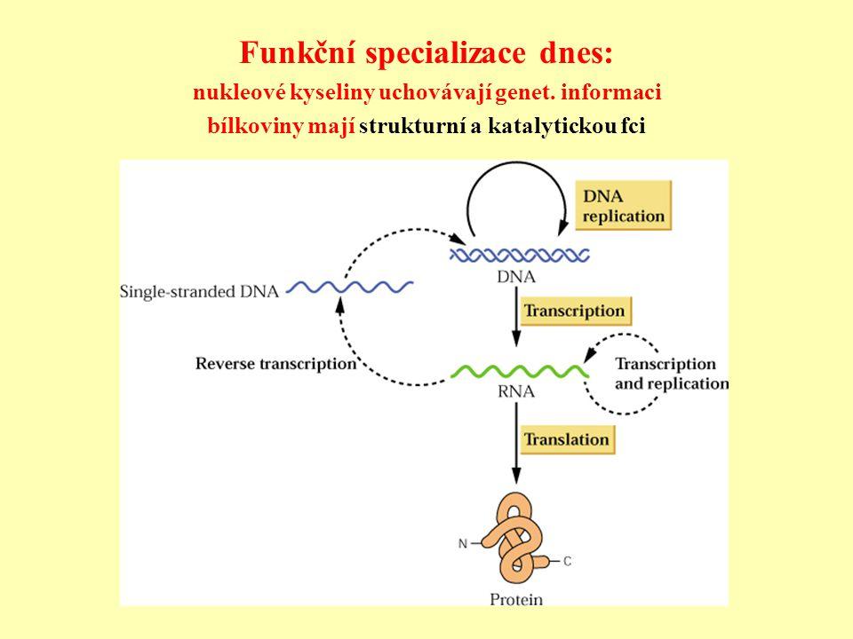 První RNA organizmus kódující proteiny: Riborgis eigensis První RNA genomy replikované RNA polymerázami – kódovaly 1 peptidový řetězec Množství chyb, tedy vznikala populace lišících se molekul RNA, proto koreplikace vzájemně výhodných lineárních molekul kódujících replikázu, ochranný plášťový protein a konformační podjednotku.