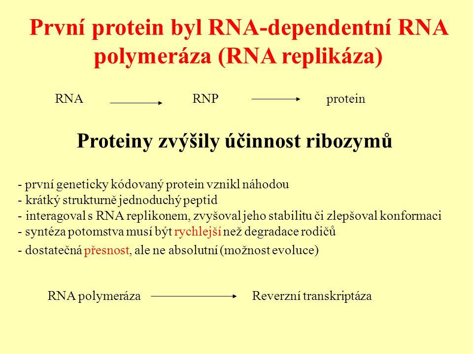 První protein byl RNA-dependentní RNA polymeráza (RNA replikáza) - první geneticky kódovaný protein vznikl náhodou - krátký strukturně jednoduchý peptid - interagoval s RNA replikonem, zvyšoval jeho stabilitu či zlepšoval konformaci - syntéza potomstva musí být rychlejší než degradace rodičů - dostatečná přesnost, ale ne absolutní (možnost evoluce) RNA polymeráza Reverzní transkriptáza Proteiny zvýšily účinnost ribozymů RNARNPprotein