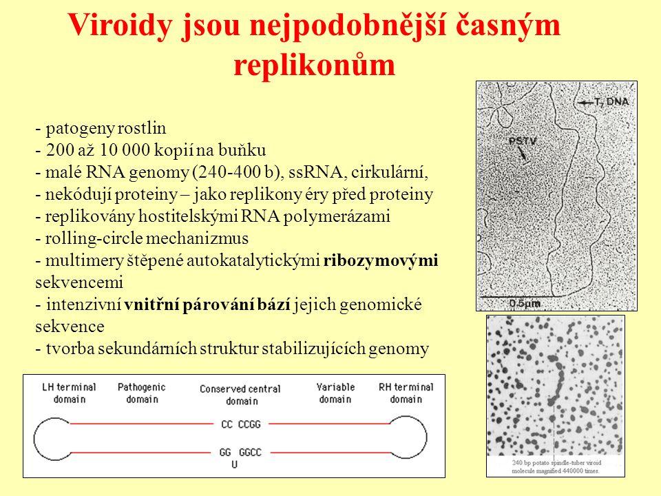 Viroidy jsou nejpodobnější časným replikonům - patogeny rostlin - 200 až 10 000 kopií na buňku - malé RNA genomy (240-400 b), ssRNA, cirkulární, - nekódují proteiny – jako replikony éry před proteiny - replikovány hostitelskými RNA polymerázami - rolling-circle mechanizmus - multimery štěpené autokatalytickými ribozymovými sekvencemi - intenzivní vnitřní párování bází jejich genomické sekvence - tvorba sekundárních struktur stabilizujících genomy