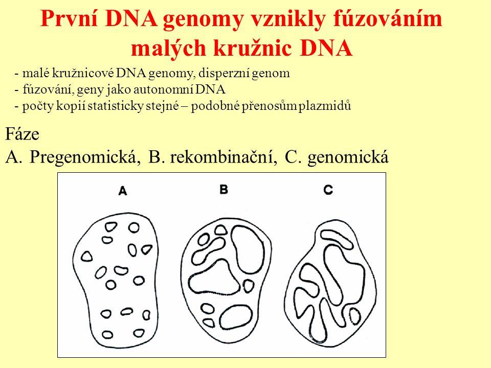 První DNA genomy vznikly fúzováním malých kružnic DNA - malé kružnicové DNA genomy, disperzní genom - fúzování, geny jako autonomní DNA - počty kopií statisticky stejné – podobné přenosům plazmidů Fáze A.Pregenomická, B.