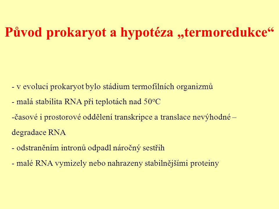 """Původ prokaryot a hypotéza """"termoredukce - v evoluci prokaryot bylo stádium termofilních organizmů - malá stabilita RNA při teplotách nad 50 o C -časové i prostorové oddělení transkripce a translace nevýhodné – degradace RNA - odstraněním intronů odpadl náročný sestřih - malé RNA vymizely nebo nahrazeny stabilnějšími proteiny"""