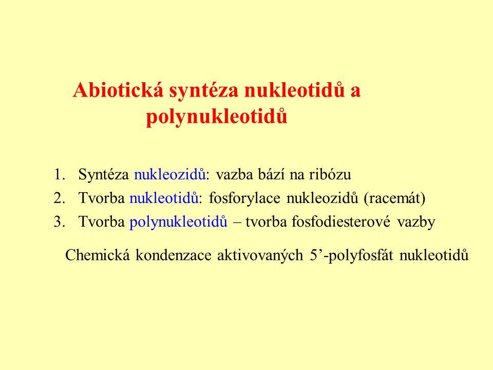 Abiotická syntéza nukleotidů a polynukleotidů Chemická kondenzace aktivovaných 5'-polyfosfát nukleotidů 1.Syntéza nukleozidů: vazba bází na ribózu 2.Tvorba nukleotidů: fosforylace nukleozidů (racemát) 3.Tvorba polynukleotidů – tvorba fosfodiesterové vazby