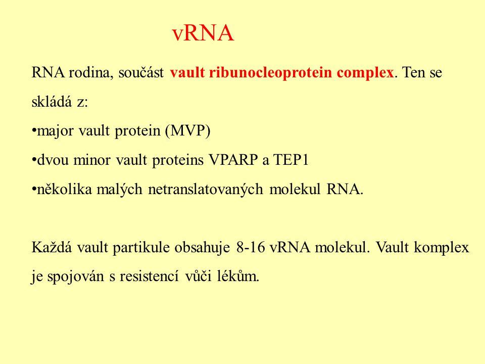 Vault RNA -přilepena na povrchu jaderné membrány a asociována s komplexem jaderných pórů -funkce neznámá, spíše funkční než strukturní (exp.