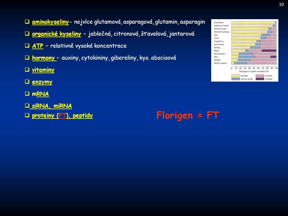  aminokyseliny- nejvíce glutamová, asparagová, glutamin, asparagin  organické kyseliny – jablečná, citronová, šťavelová, jantarová  ATP – relativně