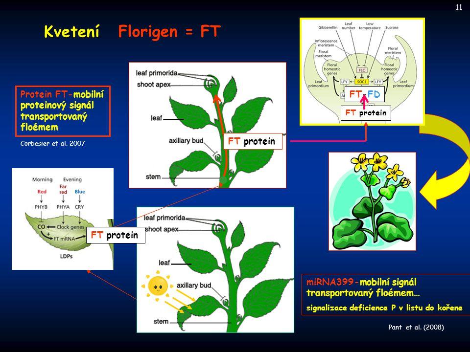 Kvetení Florigen = FT FT protein Protein FT-mobilní proteinový signál transportovaný floémem Corbesier et al. 2007 miRNA399-mobilní signál transportov