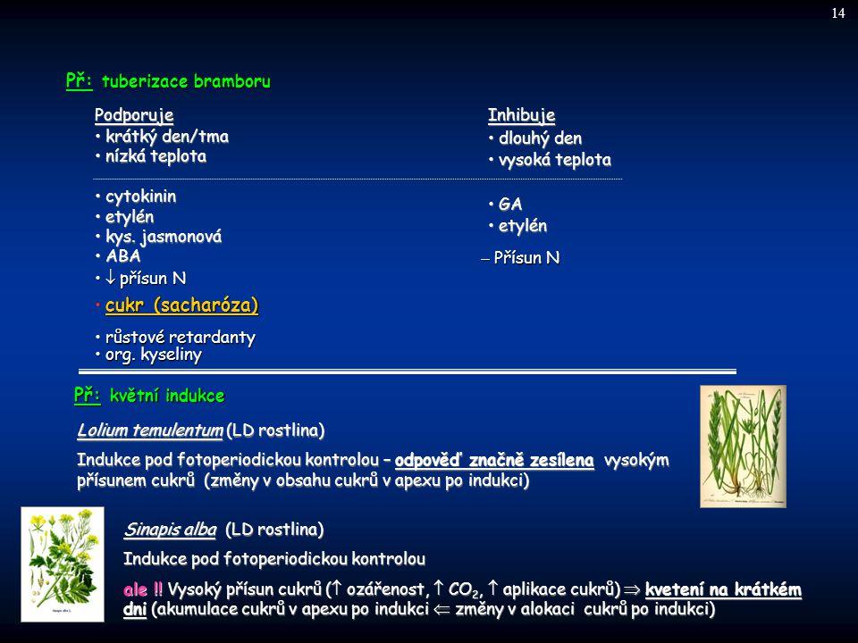 tuberizace bramboru Př: tuberizace bramboru Podporuje krátký den/tma krátký den/tma nízká teplota nízká teplota cytokinin cytokinin etylén etylén kys.