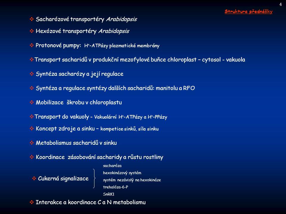  Metabolismus sacharidů v sinku  Transport do vakuoly - Vakuolární H + -ATPázy a H + -PPázy  Syntéza sacharózy a její regulace  Mobilizace škrobu
