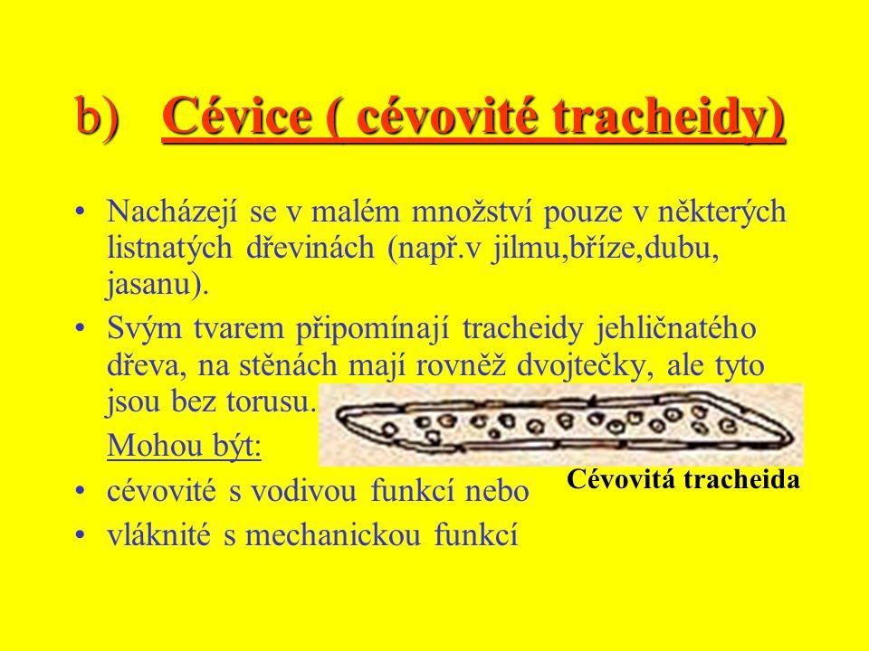 b)Cévice ( cévovité tracheidy) Nacházejí se v malém množství pouze v některých listnatých dřevinách (např.v jilmu,bříze,dubu, jasanu).