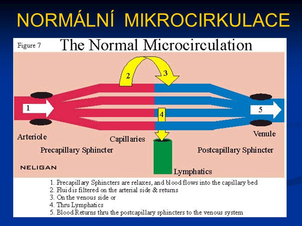NORMÁLNÍ MIKROCIRKULACE