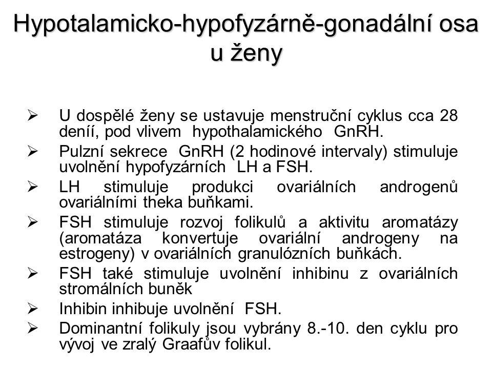 Hypotalamicko-hypofyzárně-gonadální osa u ženy  Estrogeny uskutečńují v adenohypofýze dvojí zpětnovazebnou akci:  Zpočátku inhibují sekreci gonadotropinu (negativní zpětnovazebný okruh)  Později vysoké hladiny zvyšují sekreci GnRH a zvyšují citlivost LH na GnRH (pozitivní zpětná vazba), což vede k náhému nárůstu LH iprostřed cyklu, který indukuje ovulaci ze zralého folikulu.