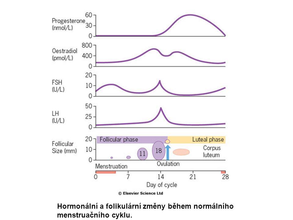 Hypotalamicko-hypofyzárně-gonadální osa u ženy Estrogeny indukují také ženské sekundární charakteristiky:  Rozvoj prsou a prsních bradavek  Růst vaginální a vulvární oblasti  Růst pubického ochlupení  Růst a zrání dělohy a vejcovodů  Cirkulují ve vazbě na SHBG.