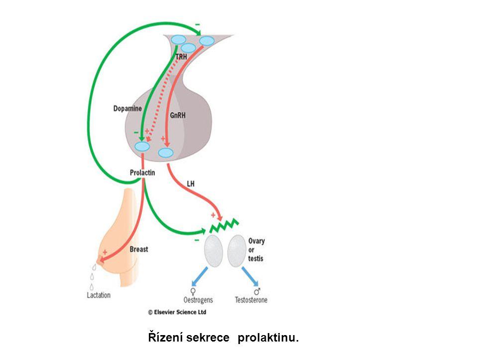 Prolaktinová sekrece za fyziologických podmínek  Prolaktin je pod vlivem tonické inhibice dopaminem, částečně tlumen i TRH).