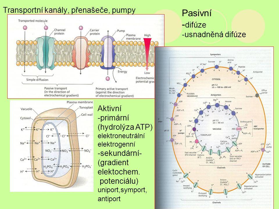 Transportní kanály, přenašeče, pumpy Pasivní - difúze -usnadněná difúze Aktivní -primární (hydrolýza ATP) elektroneutrální elektrogenní -sekundární- (