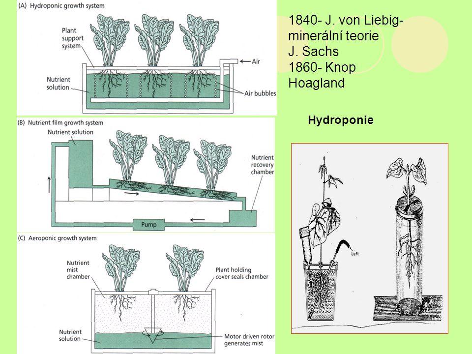 Hydroponie 1840- J. von Liebig- minerální teorie J. Sachs 1860- Knop Hoagland