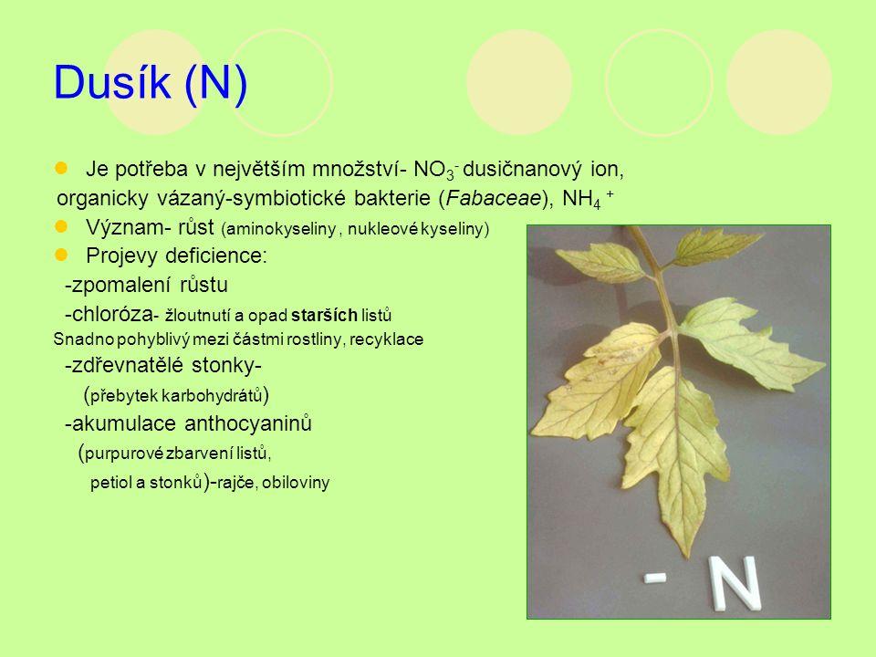 Dusík (N) Je potřeba v největším množství- NO 3 - dusičnanový ion, organicky vázaný-symbiotické bakterie (Fabaceae), NH 4 + Význam- růst (aminokyselin