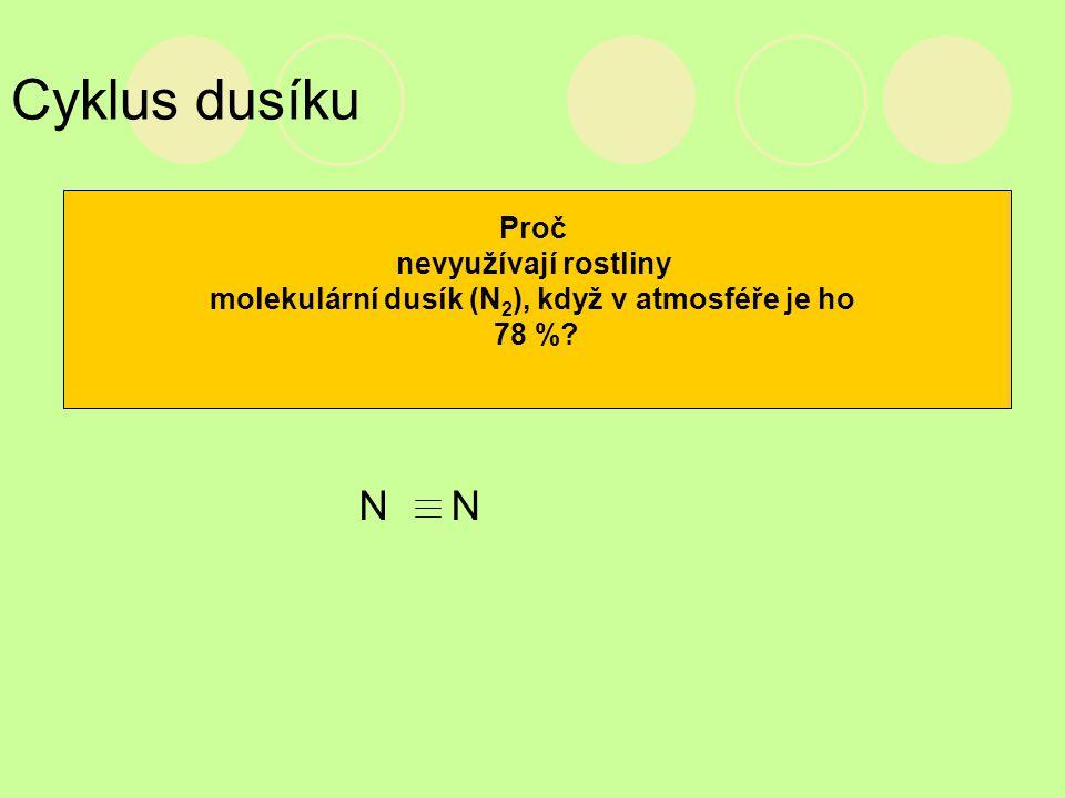 Cyklus dusíku Proč nevyužívají rostliny molekulární dusík (N 2 ), když v atmosféře je ho 78 %? NN