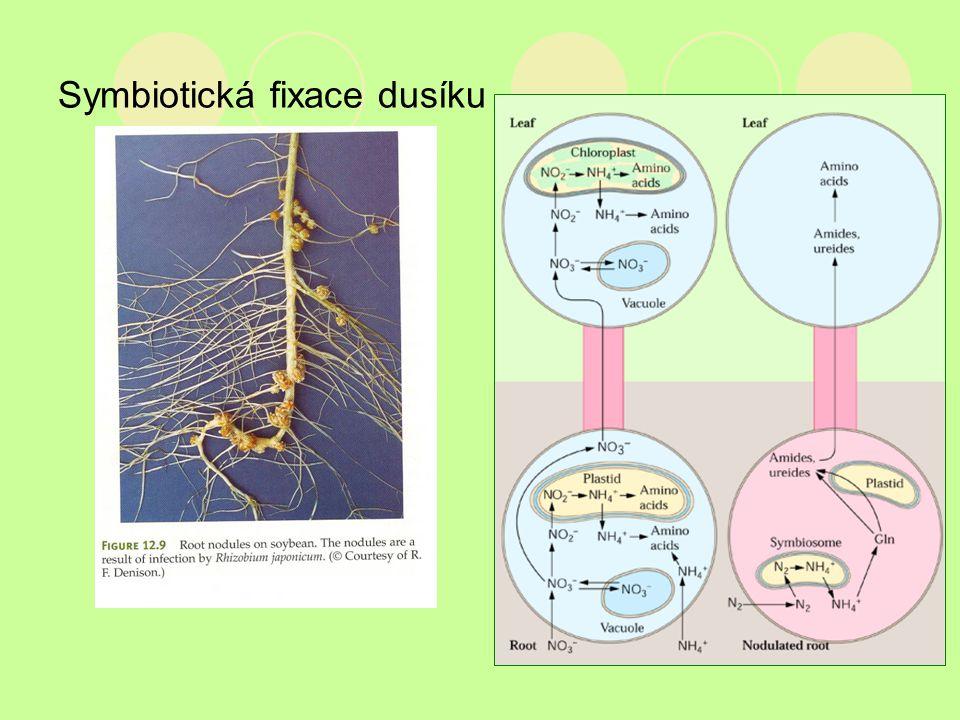 Symbiotická fixace dusíku Close Window Close Window
