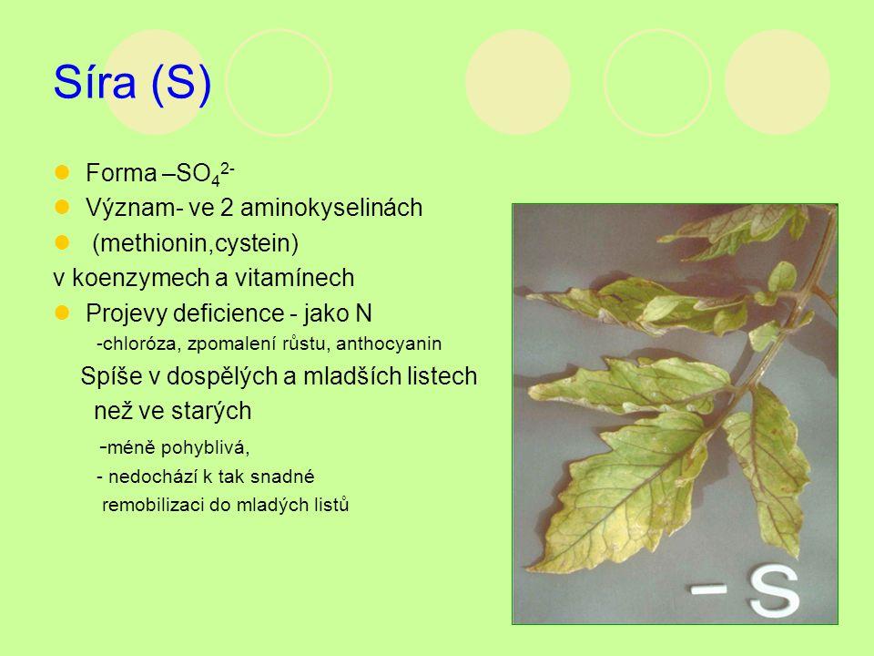 Síra (S) Forma –SO 4 2- Význam- ve 2 aminokyselinách (methionin,cystein) v koenzymech a vitamínech Projevy deficience - jako N -chloróza, zpomalení rů