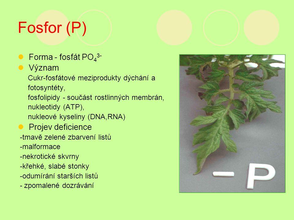 Fosfor (P) Forma - fosfát PO 4 3- Význam Cukr-fosfátové meziprodukty dýchání a fotosyntéty, fosfolipidy - součást rostlinných membrán, nukleotidy (ATP