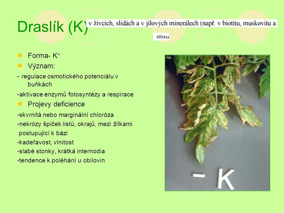 Draslík (K) Forma- K + Význam: - regulace osmotického potenciálu v buňkách - aktivace enzymů fotosyntézy a respirace Projevy deficience -skvrnitá nebo