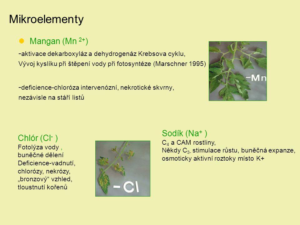Mikroelementy Mangan (Mn 2+ ) - aktivace dekarboxyláz a dehydrogenáz Krebsova cyklu, Vývoj kyslíku při štěpení vody při fotosyntéze (Marschner 1995) -