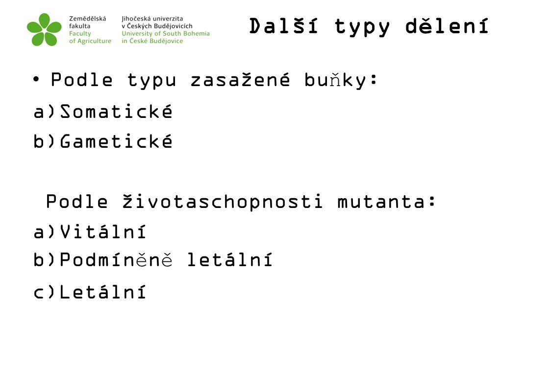 Další typy dělení Podle typu zasažené buňky: a)Somatické b)Gametické Podle životaschopnosti mutanta: a)Vitální b)Podmíněně letální c)Letální