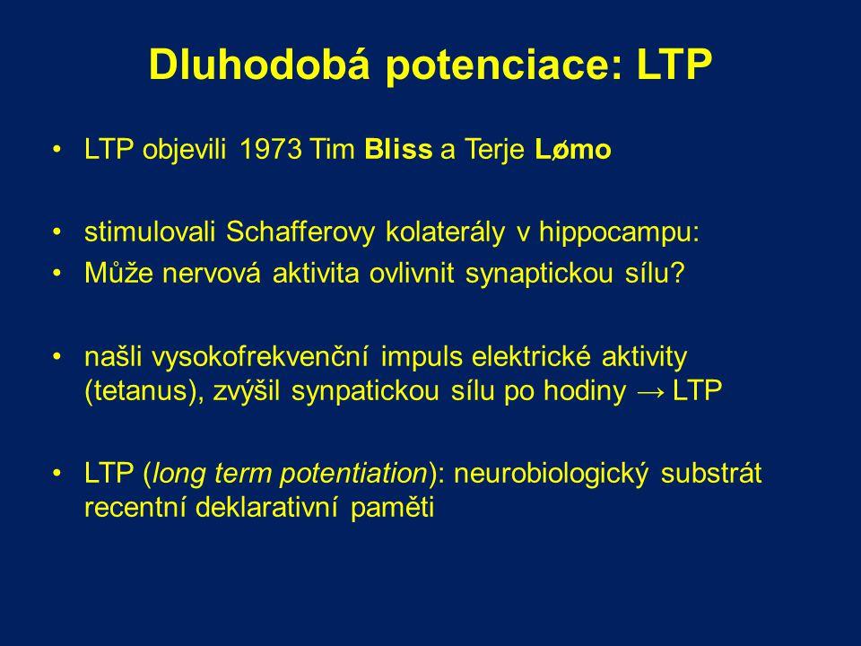 Dluhodobá potenciace: LTP LTP objevili 1973 Tim Bliss a Terje Lomo stimulovali Schafferovy kolaterály v hippocampu: Může nervová aktivita ovlivnit syn