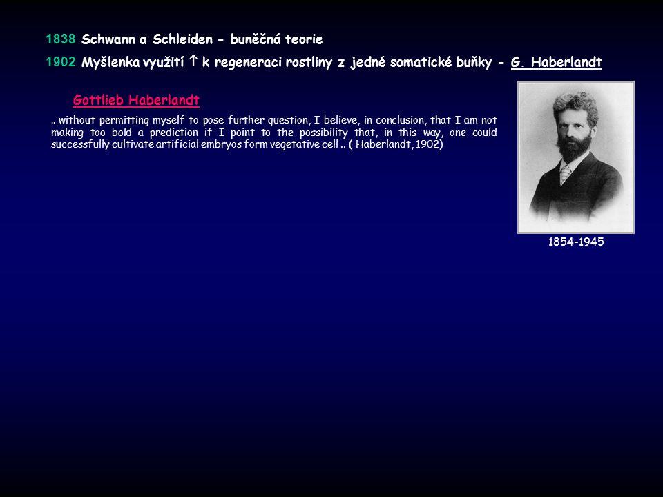 1838 1838 Schwann a Schleiden - buněčná teorie 1902 1902 Myšlenka využití  k regeneraci rostliny z jedné somatické buňky - G. Haberlandt Gottlieb Hab
