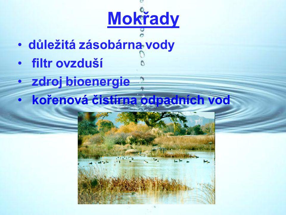 Mokřady důležitá zásobárna vody filtr ovzduší zdroj bioenergie kořenová čistírna odpadních vod