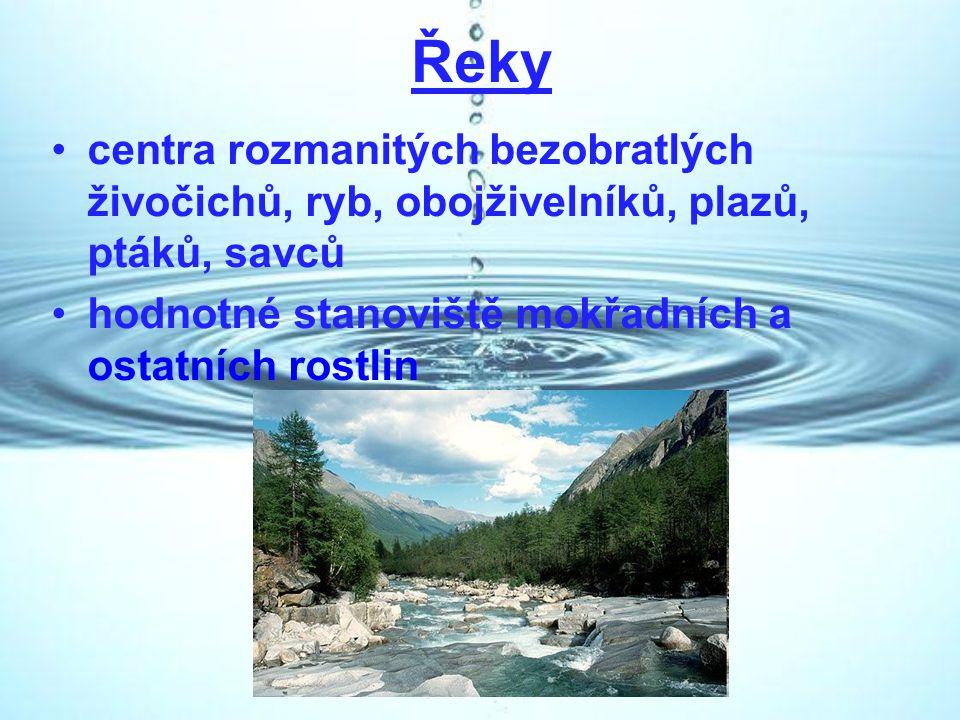 Řeky centra rozmanitých bezobratlých živočichů, ryb, obojživelníků, plazů, ptáků, savců hodnotné stanoviště mokřadních a ostatních rostlin