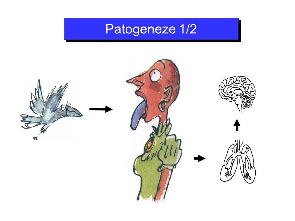 - T-lymfocyty + - produkce cytokinů aktivace makrofágů a neutrofilů snížená produkce cytokinů (pokročilá HIV infekce) brždění fagocytózy (polysacharidové pouzdro) Mozkomíšní mok = snížená hladina komplementu a imunoglobulinů → optimální růstové médium Usnadnění hematogenního rozsevu Patogeneze 2/2