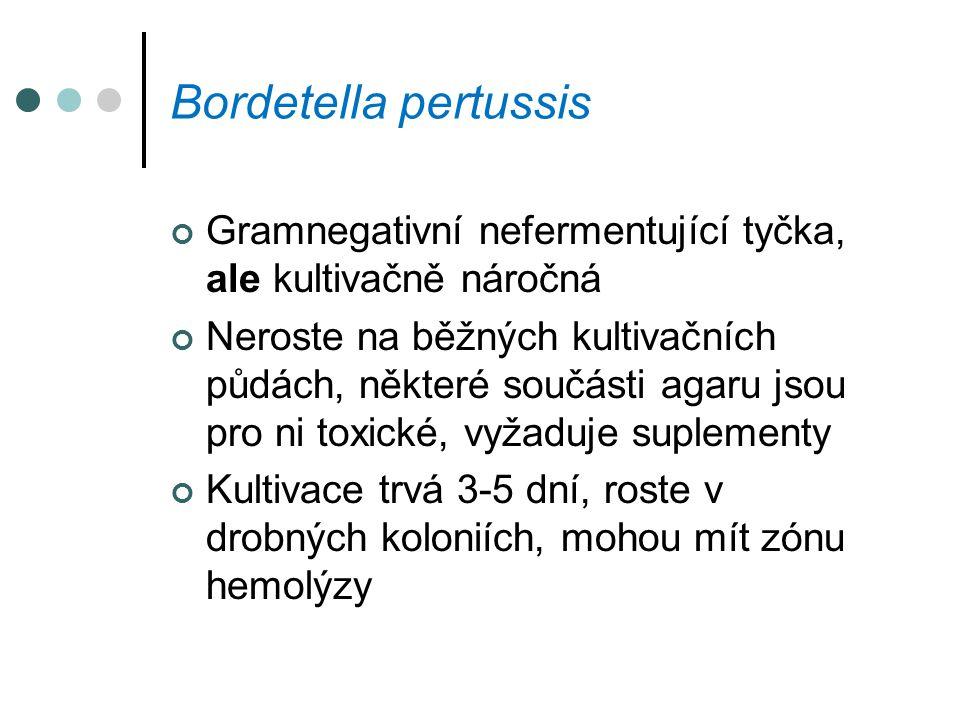 Bordetella pertussis Gramnegativní nefermentující tyčka, ale kultivačně náročná Neroste na běžných kultivačních půdách, některé součásti agaru jsou pr