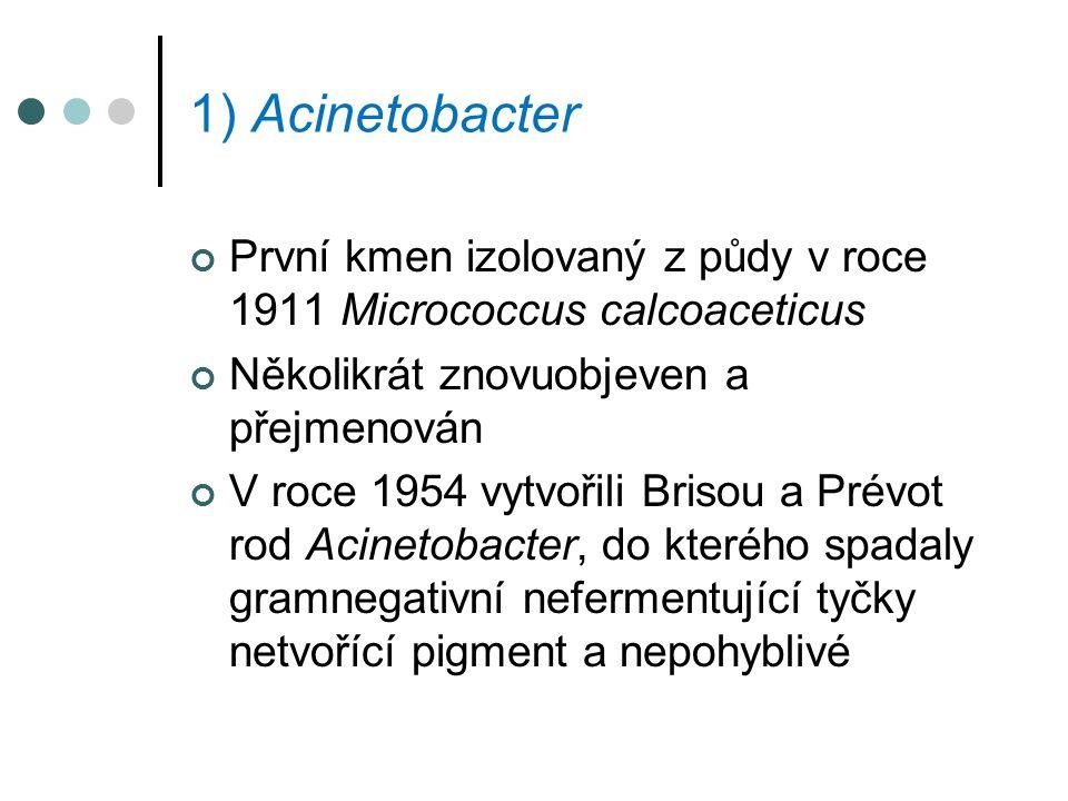 1) Acinetobacter První kmen izolovaný z půdy v roce 1911 Micrococcus calcoaceticus Několikrát znovuobjeven a přejmenován V roce 1954 vytvořili Brisou