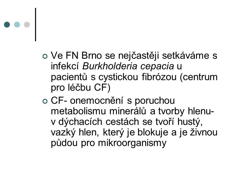 Ve FN Brno se nejčastěji setkáváme s infekcí Burkholderia cepacia u pacientů s cystickou fibrózou (centrum pro léčbu CF) CF- onemocnění s poruchou met