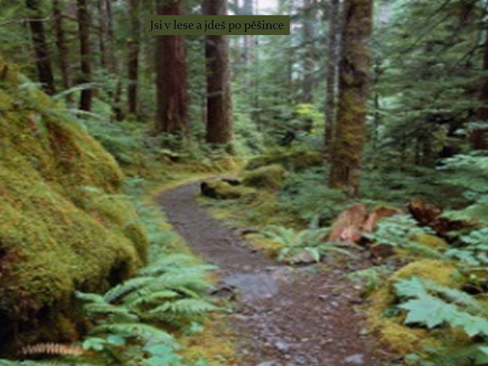 Jsi v lese a jdeš po pěšince