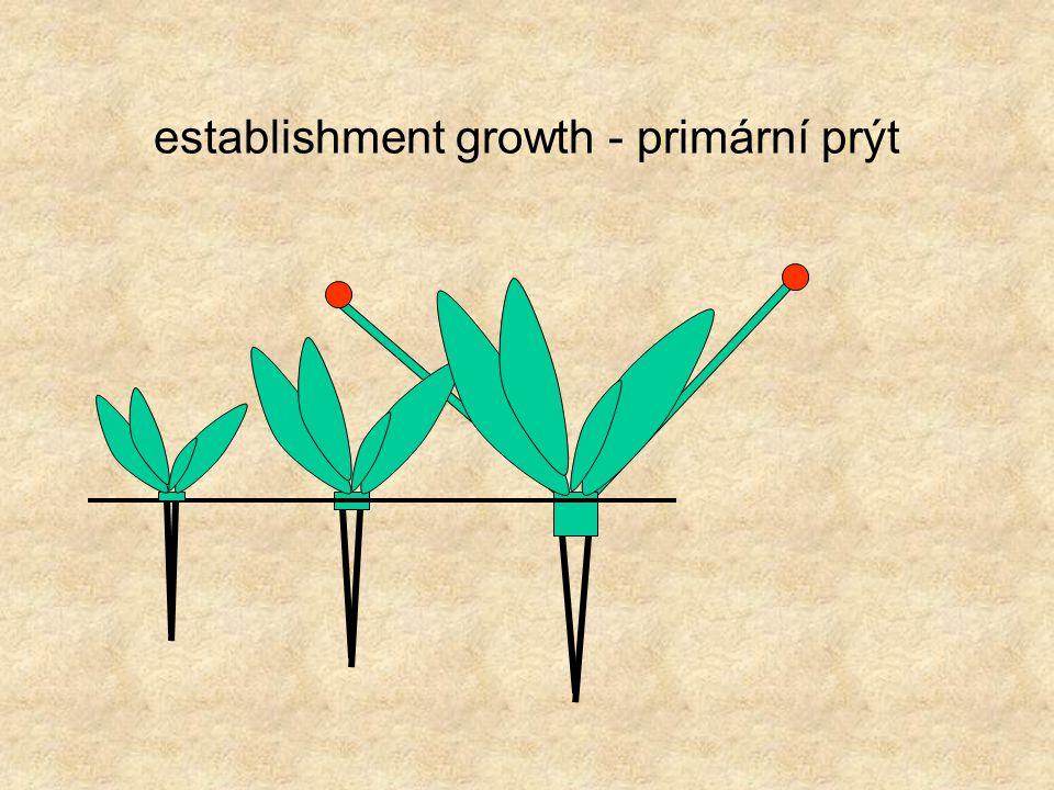 establishment growth - topophysic, cyclophysic and periphysic characters of a meristem topophysic - chování meristému je určenu jeho pozicí cyclophysic - chování meristému je určeno jeho věkem periphysic - chování meristému je určeno vnějším prostředím