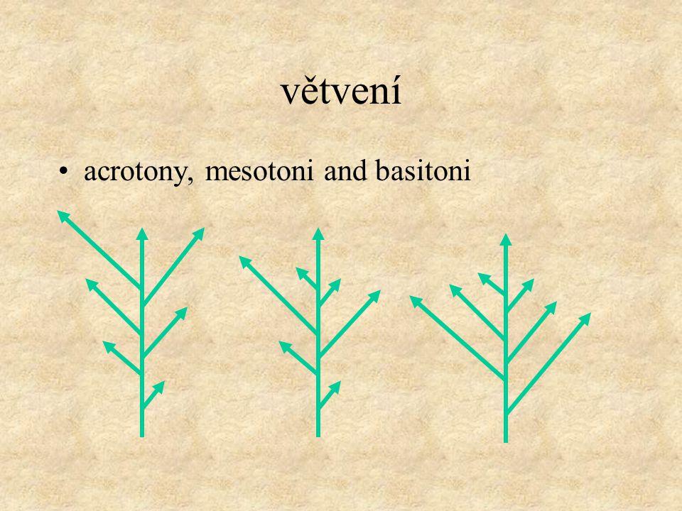 Základní stavební jednotka architektury rostlin: modul, prýt modul prýt ITERACE