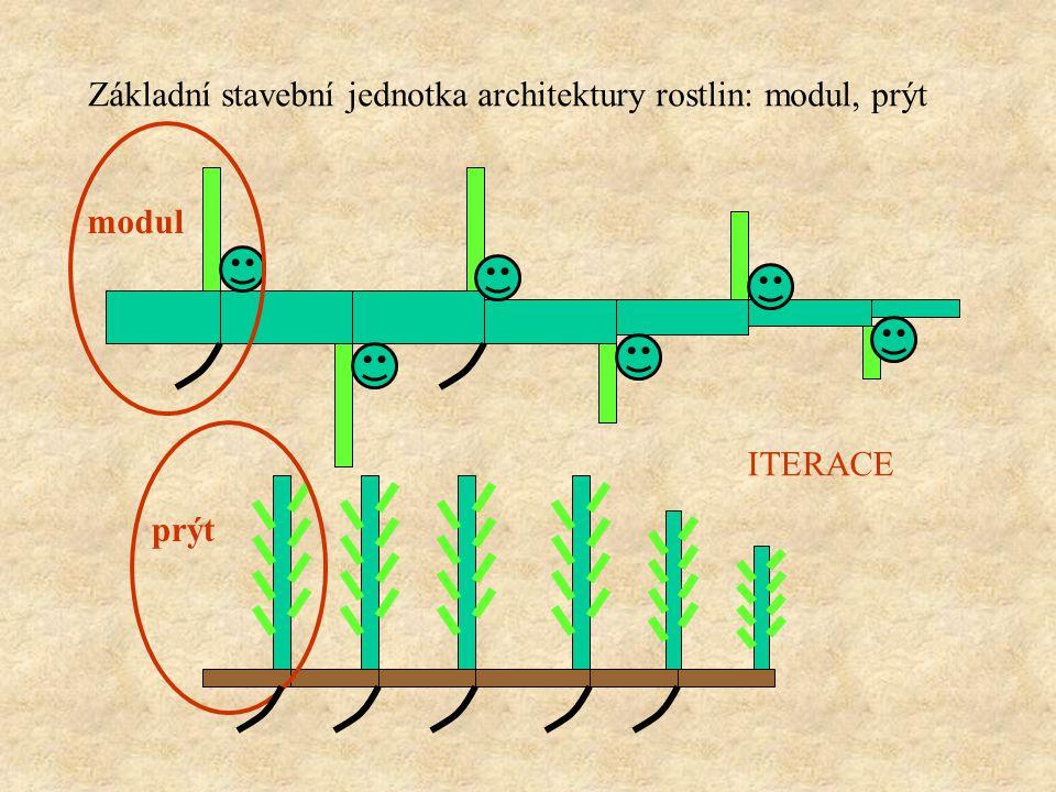 Základní stavební jednotka architektury rostlin: modul, prýt modul prýt REITERACE