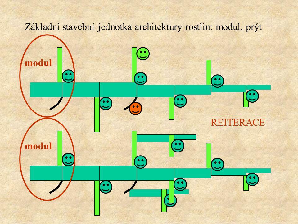 exogenní původ v nodech vznikají současně se stonkem na kterém rostou endogenní původ kdekoliv kdykoliv Axilární a adventivní pupeny
