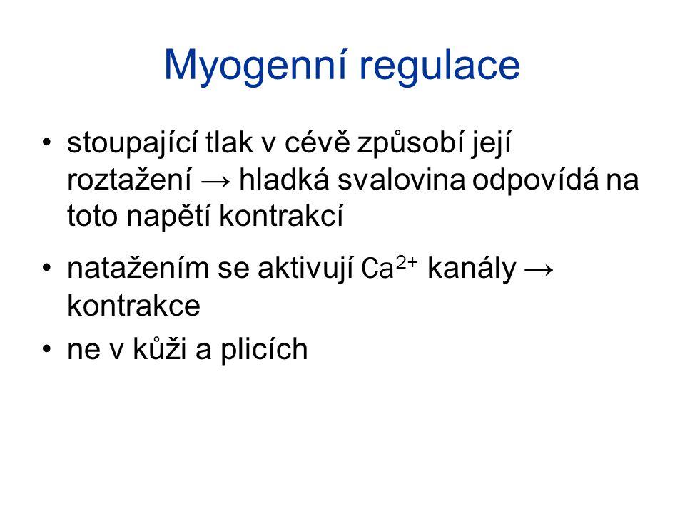 Myogenní regulace stoupající tlak v cévě způsobí její roztažení → hladká svalovina odpovídá na toto napětí kontrakcí natažením se aktivují Ca 2+ kanál