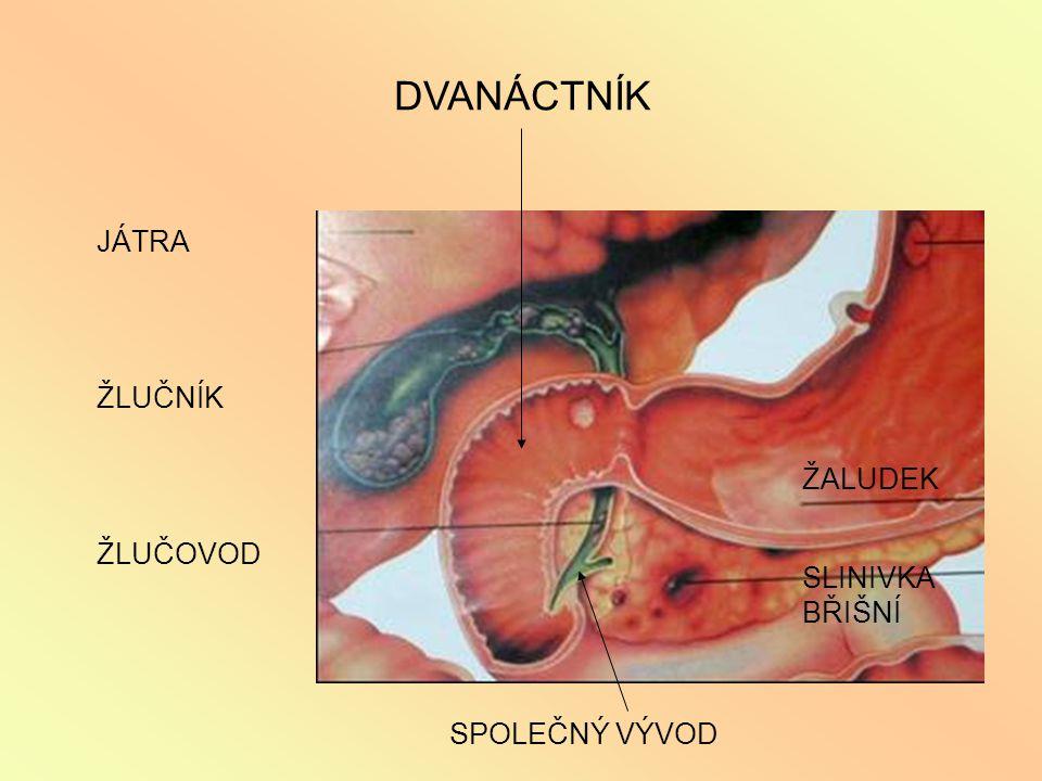 otázky .1.Proč patří rakovina tlustého střeva mezi časté onemocnění české populace.