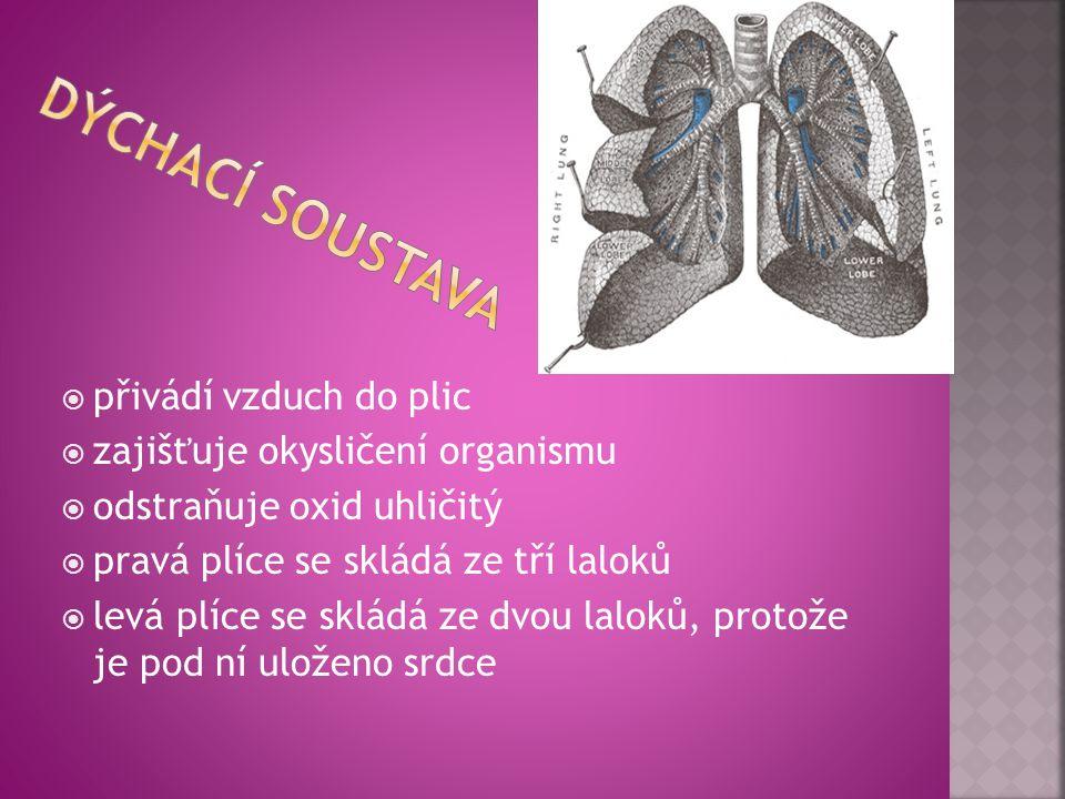  přivádí vzduch do plic  zajišťuje okysličení organismu  odstraňuje oxid uhličitý  pravá plíce se skládá ze tří laloků  levá plíce se skládá ze dvou laloků, protože je pod ní uloženo srdce