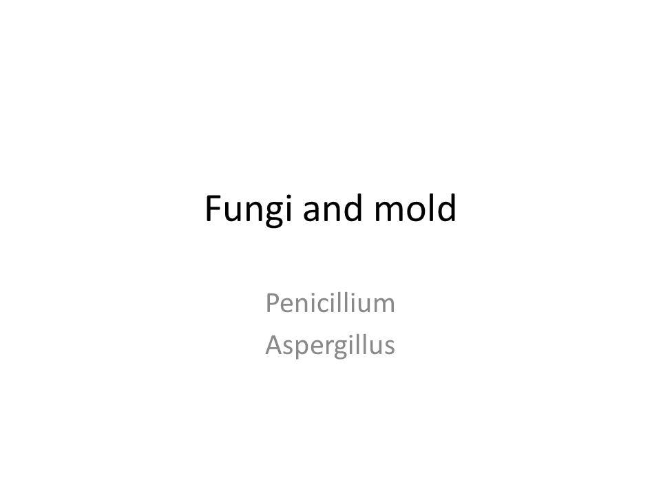 Fungi and mold Penicillium Aspergillus
