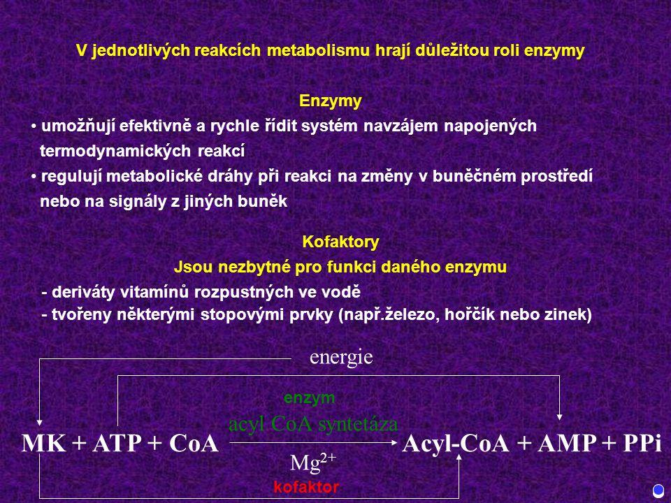 V jednotlivých reakcích metabolismu hrají důležitou roli enzymy Enzymy umožňují efektivně a rychle řídit systém navzájem napojených termodynamických reakcí regulují metabolické dráhy při reakci na změny v buněčném prostředí nebo na signály z jiných buněk Kofaktory Jsou nezbytné pro funkci daného enzymu - deriváty vitamínů rozpustných ve vodě - tvořeny některými stopovými prvky (např.železo, hořčík nebo zinek) MK + ATP + CoAAcyl-CoA + AMP + PPi acyl CoA syntetáza Mg 2+ energie enzym kofaktor