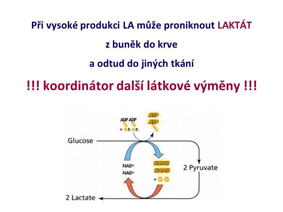 Při vysoké produkci LA může proniknout LAKTÁT z buněk do krve a odtud do jiných tkání !!! koordinátor další látkové výměny !!!